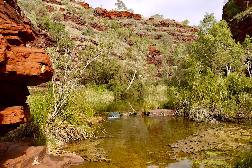 Dales Gorge Trial - Wasserwege begleiten den Wanderer - Der Osten des Karijini National Park - Pilbara, Western Australia