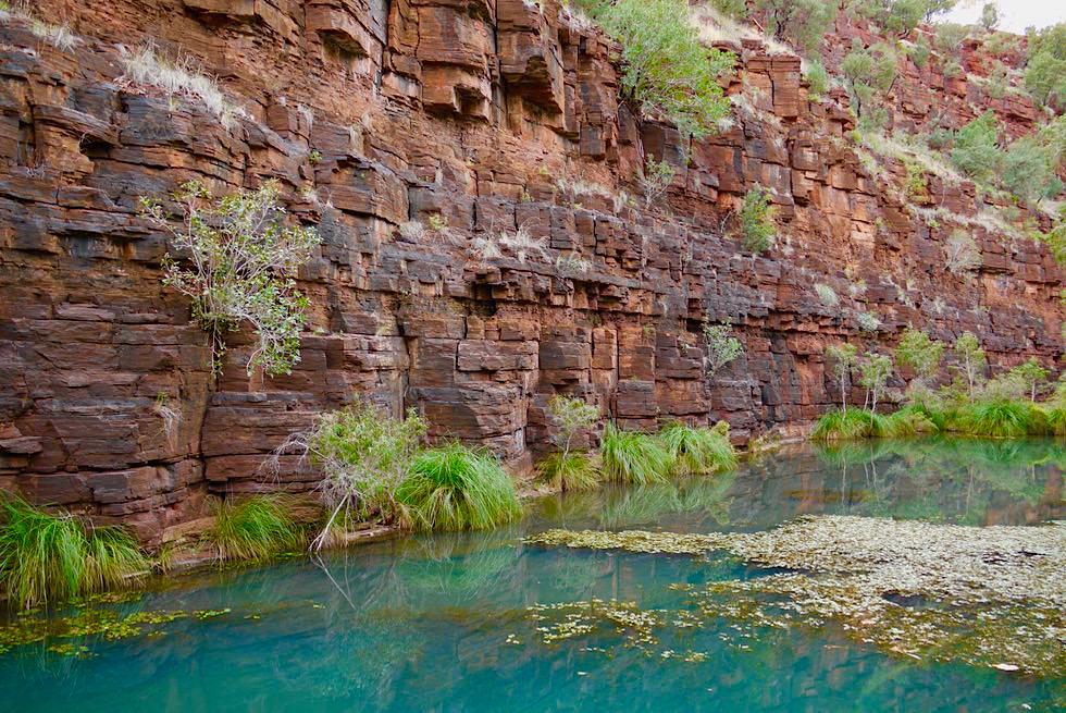Dales Gorge Wanderung - Steilwand & Wasserlauf - Karijini National Park - Pilbara, Western Australia
