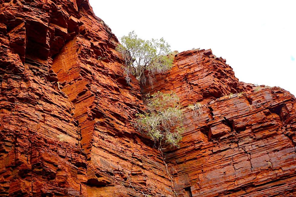 Handrail Pool - rote Steilwand - Karijini National Park, Pilbara - Western Australia
