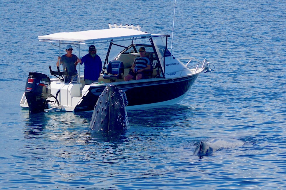 """Wale beobachten in Hervey Bay - Buckelwale """"breachen"""" direkt vor Fischerboot - Queensland"""