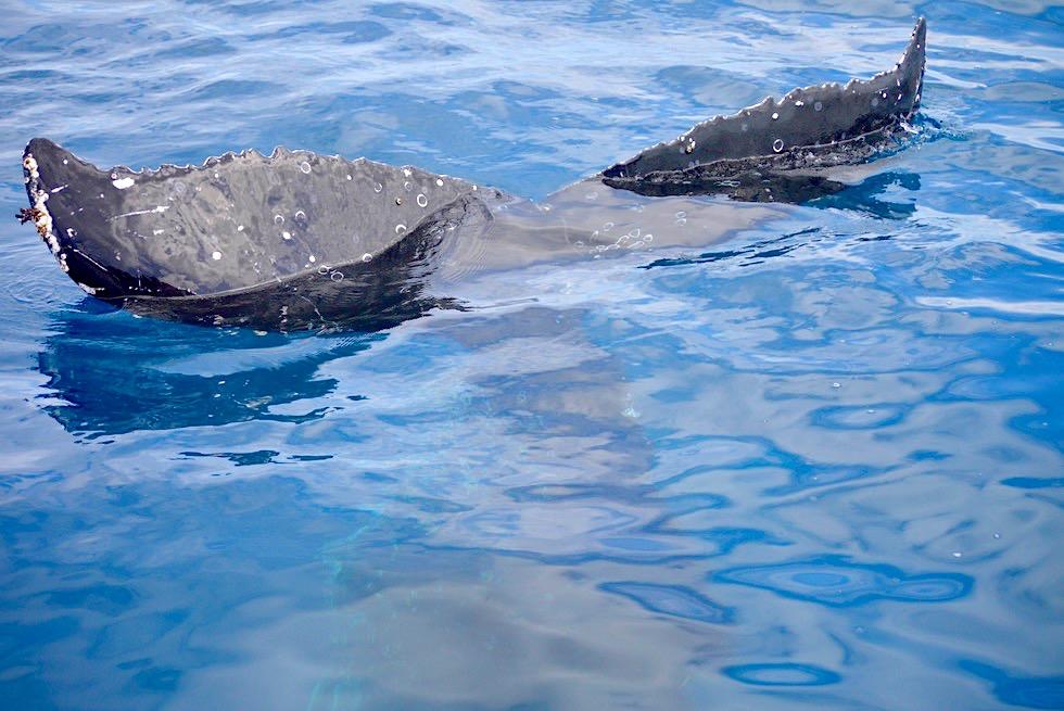 Hervey Bay - Schlafender Wal: Atmen & Schnarchen - Freedom Whale Watch Tour - Queensland