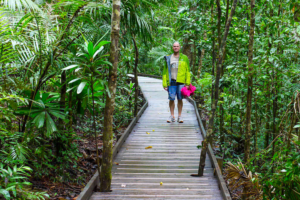 Jindalba Boardwalk der schönste Holzsteg-Rundweg im Daintree Rainforest - Wet Tropics of Queensland