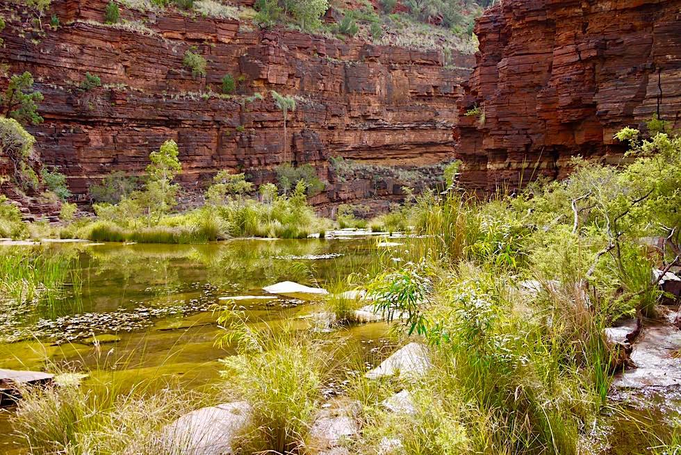 Karijini National Park - Dales Gore Wanderung: zwischen Steilwänden & Wasserwegen - Pilbara, Western Australia