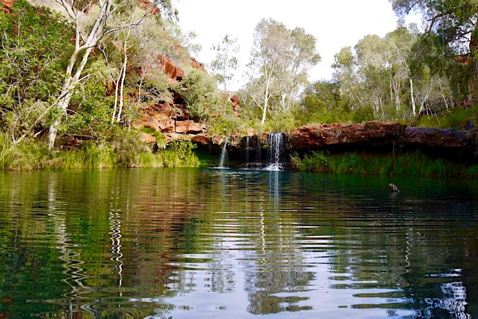 Karijini National Park - Ausblick auf Fern Pool - Pilbara, Western Australia