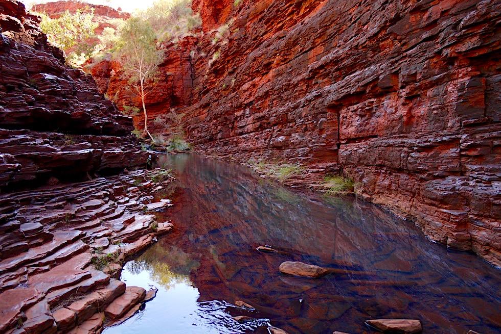 Karijini NP - Feurige Hancock Gorge spiegelt sich im Wasser - Pilbara - Western Australia
