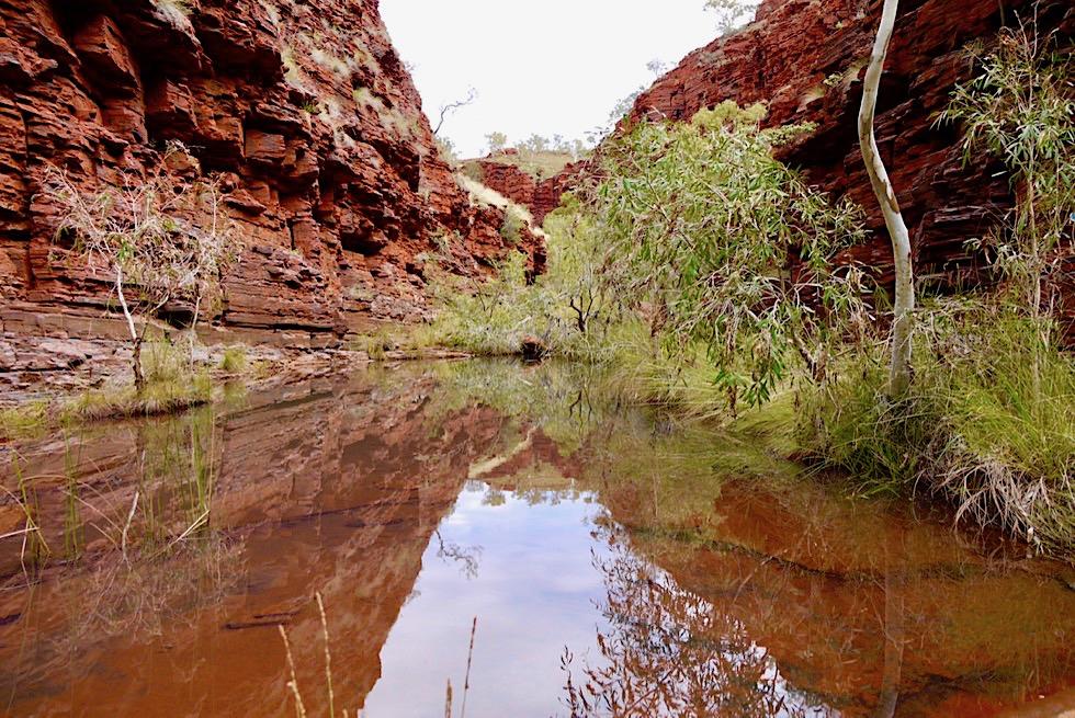Karijini National Park - Hancock Gorge durchsteigen von Wasserpfützen - Pilbara -Western Australia