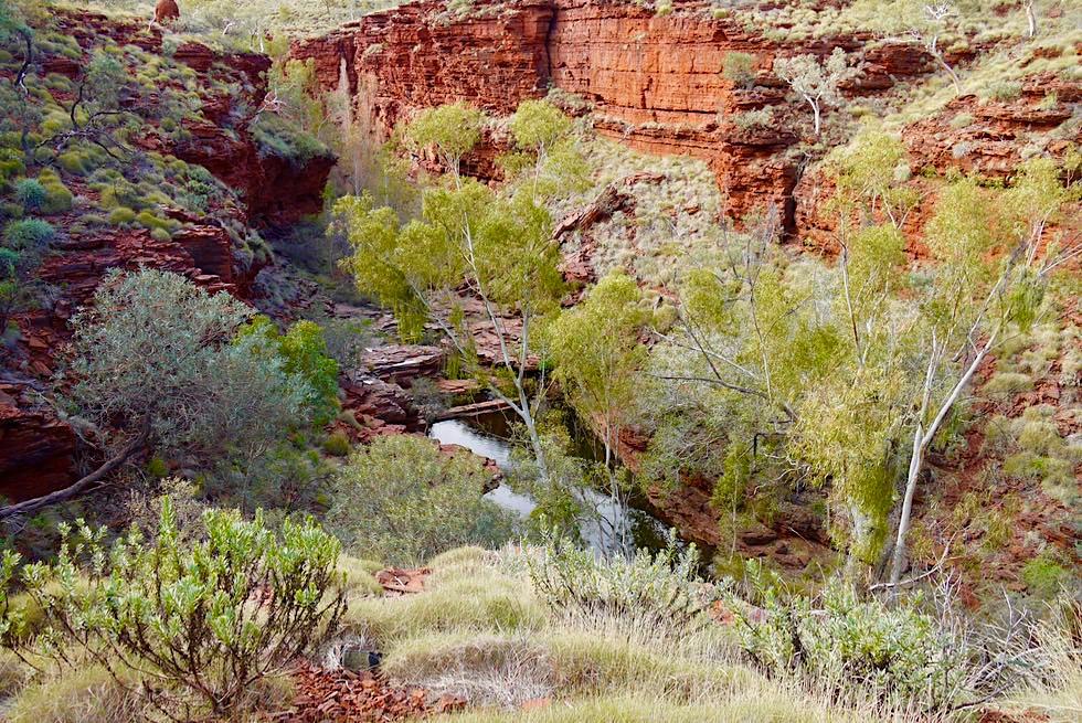 Karijini National Park - Weano Gorge Wanderung - Pilbara - Western Australia