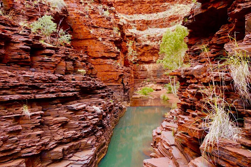 Karijini National Park - Weg bzw. lustige Kletterpartie zum Amphitheater - Pilbara - Western Australia