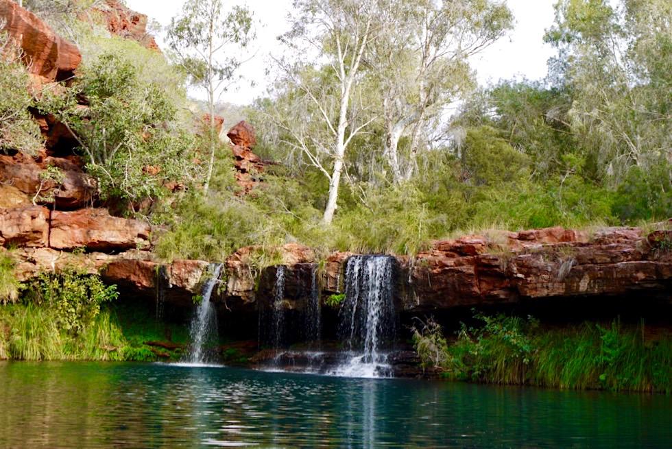 Karijini National Park - Ausblick auf den wildschönen Fern Pool & Wasserfall - Pilbara, Western Australia