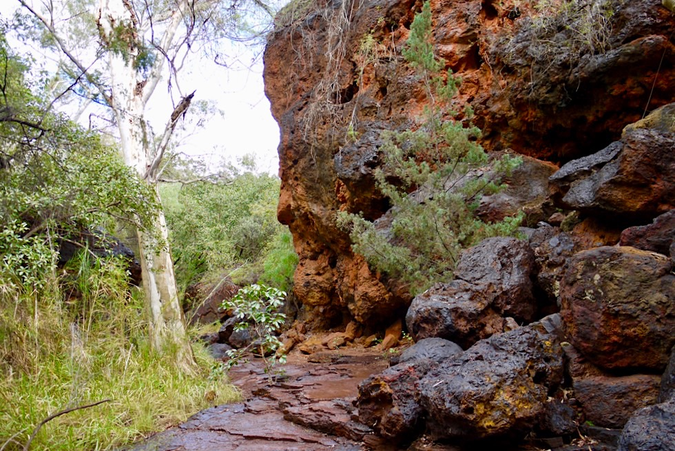Karijini National Park - Weg zum Fern Pool - Pilbara, Western Australia