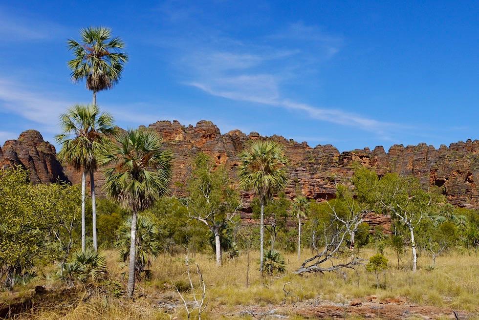 Keep River National Park - Livistonia Palmen, Vogelgeschwitzer & bunte Sandstein-Felswände - Northern Territory