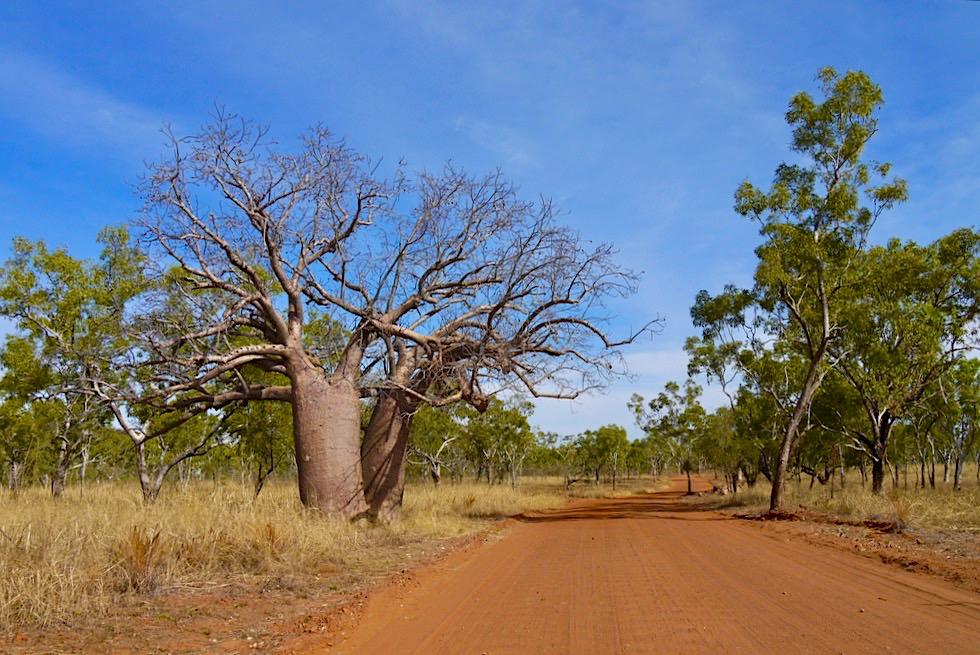 Keep River National Park - Gut befahrbare Schotterpiste führt zu Sehenswürdigkeiten im Park - Northern Territory
