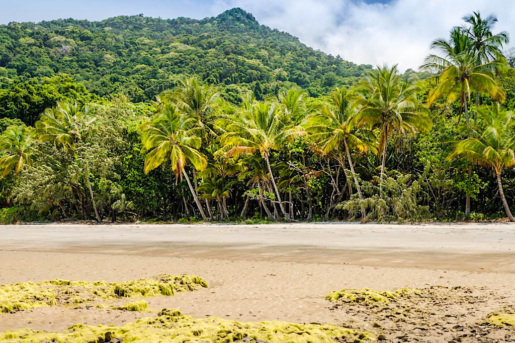 Myall Beach beim Cape Tribulation - Daintree National Park - Queensland