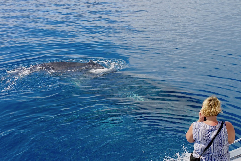 Buckelwal-Beobachtungstour - Freedom Whale Watch - Hervey Bay - Queensland