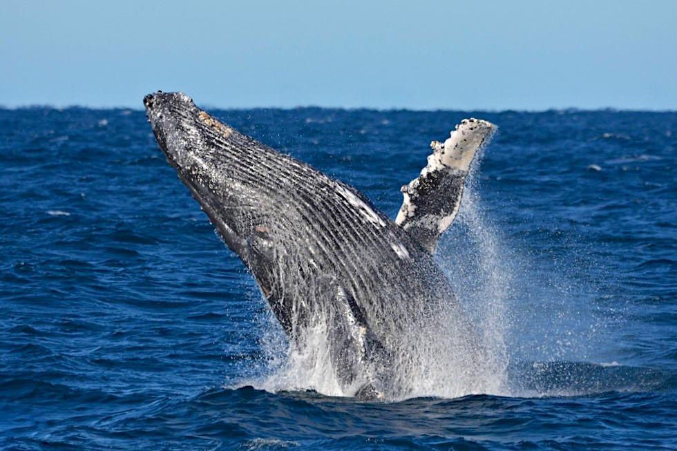 Buckelwale beobachten - Augusta, Margaret River Region - Whale Watch Western Australia