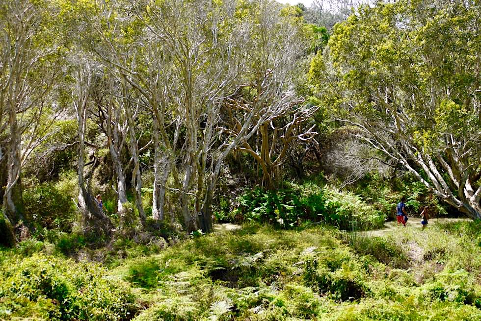 Eli Creek - Schön angelegter Weg zum Einstieg in den Eli Creek - Fraser Island - Queensland