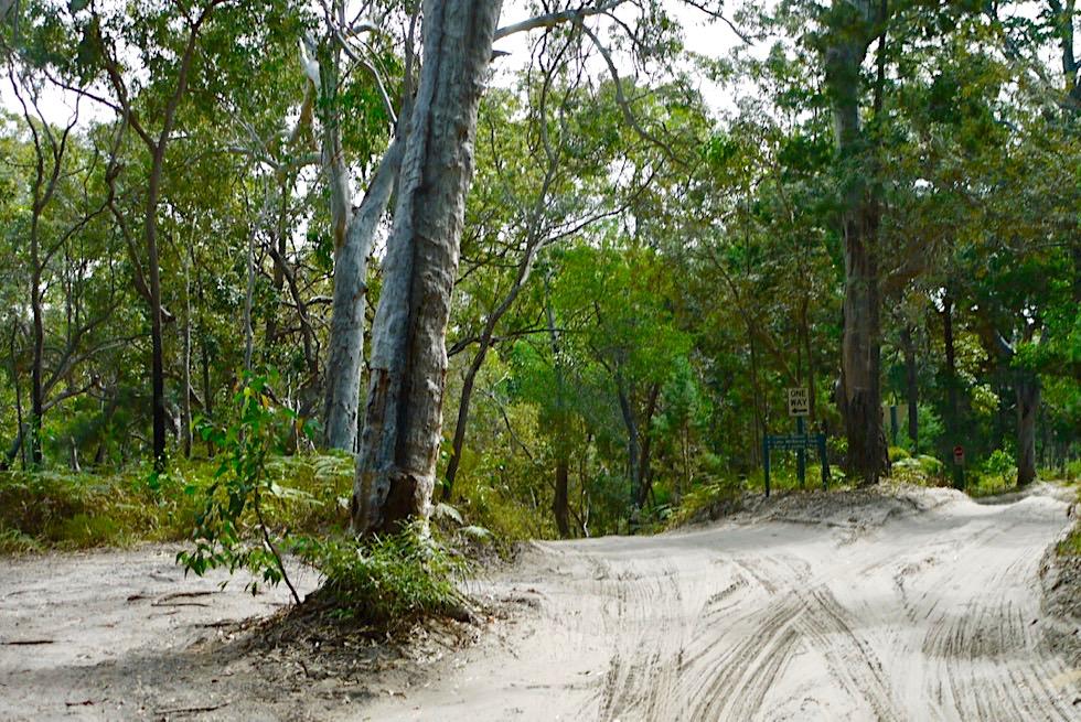 Fraser Island - Sandpisten führen mitten durch Regenwald - Queensland
