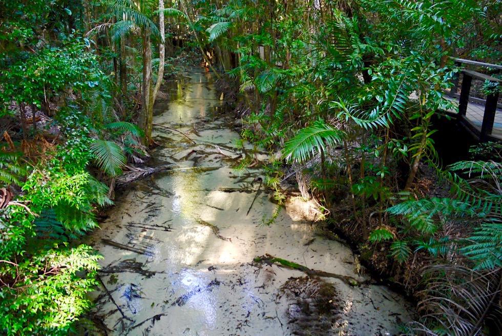 Fraser Island - Wanggoolba Creek bei der Central Station: Kristallklares, unsichtbares Wasser - Queensland