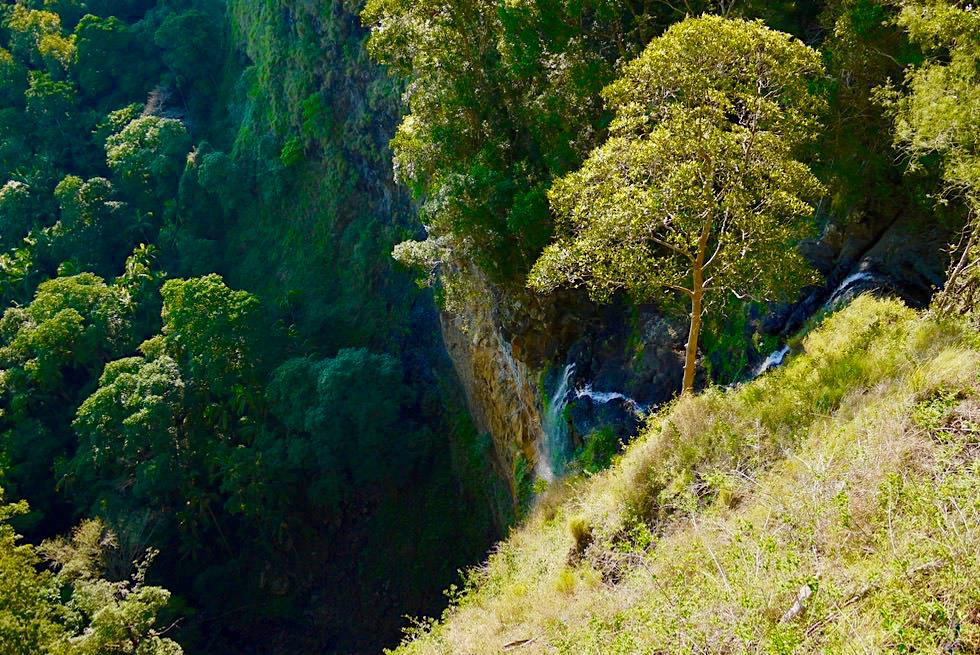 Mapelton Falls - Spektakuläre Steilwand & Wasserfall - Regenwald - Queensland