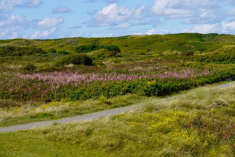 Wangerooge - Bewachsene alte Dünen in Grün & Bunt im Innern des Westteils - Ostfriesische Inseln - Nationalpark Wattenmeer - Nordsee