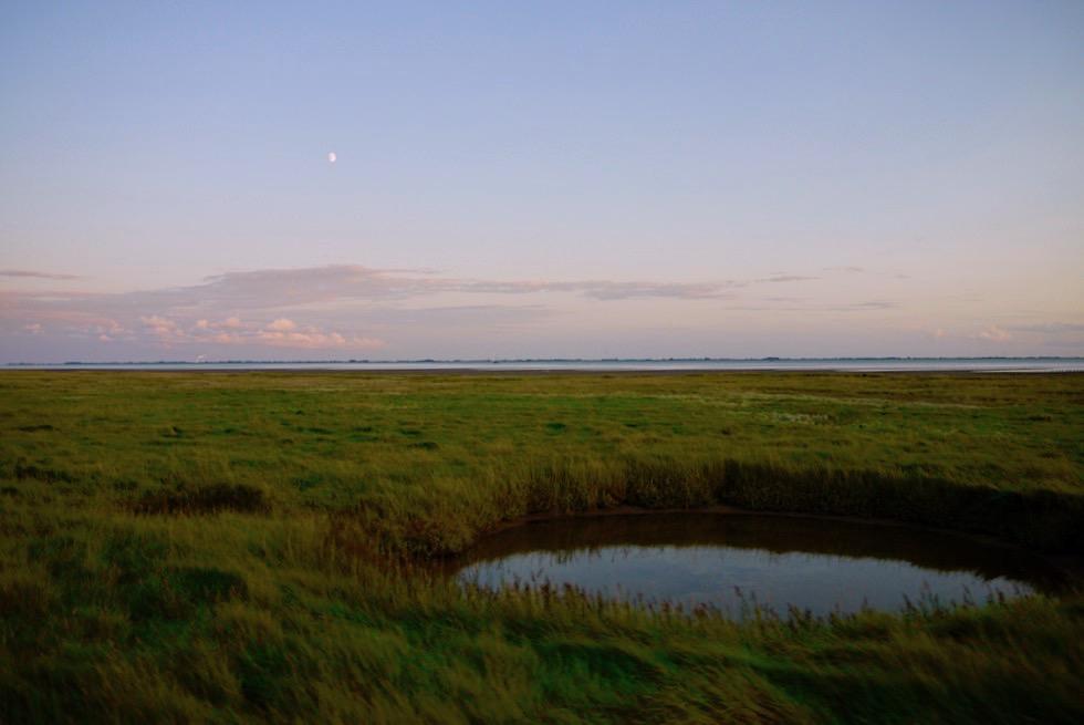 Wangerooge - Ehemalige Bombenkrater sind heute Wasserlöcher & Kleinbiotope - Ostfriesische Inseln - Nationalpark Wattenmeer & Nordsee