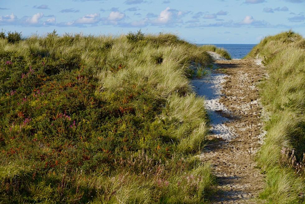 Wangerooge- Faszinierende Dünenlandschaft im Osten - Ostfriesische Inseln - Nationalpark Wattenmeer & Nordsee