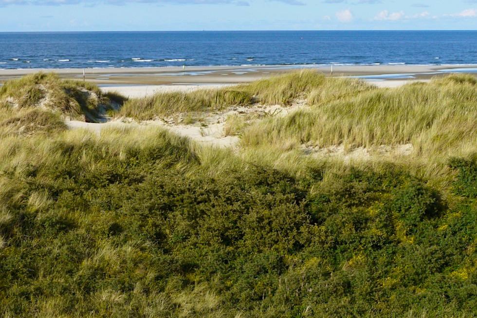 Wangerooge - Ausblick Dünen, Strand & Nordsee von der Jever Aussichtsplattform im Osten - Ostfriesische Inseln - Nationalpark Wattenmeer
