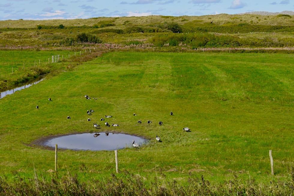 Wangerooge - Marschland & einstige Bombentrichter sind jetzt Wasserlöcher mit Kleinbiotopen - Ostfriesische Inseln - Nordsee