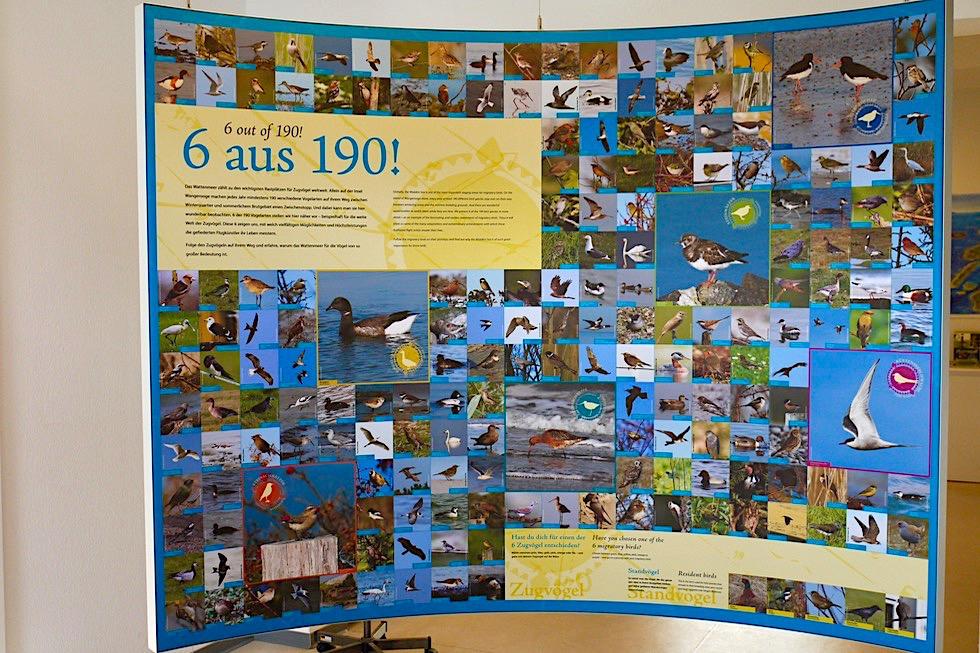 Nationalpark Haus Wangerooge - Viele Informationen zu Zugvögel & Strandvögel - Ostfriesische Inseln - Nordsee