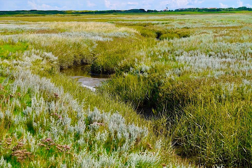 Wangerooge - Saftige, bunte Salzwiesen am Westaußengroden - Ostfriesische Inseln - Naturwunder Wattenmeer & Nordsee