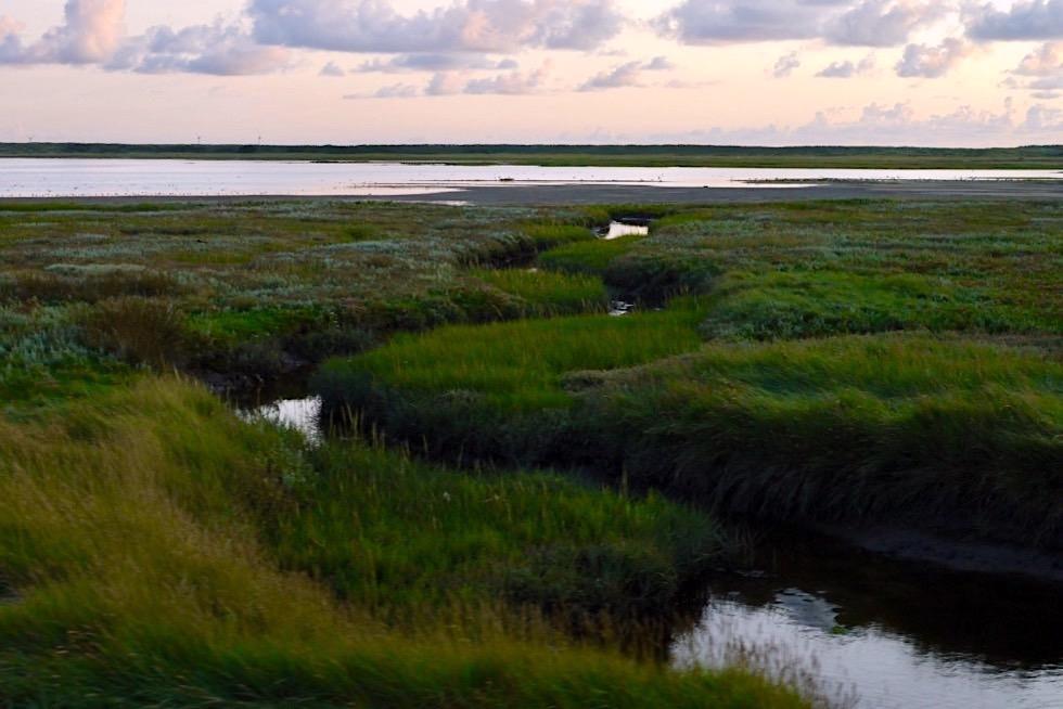 Wangerooge - Salzwiesen & Westaußengroden bei Sonnenuntergang - Ostfriesische Inseln - Nationalpark Wattenmeer & Nordsee