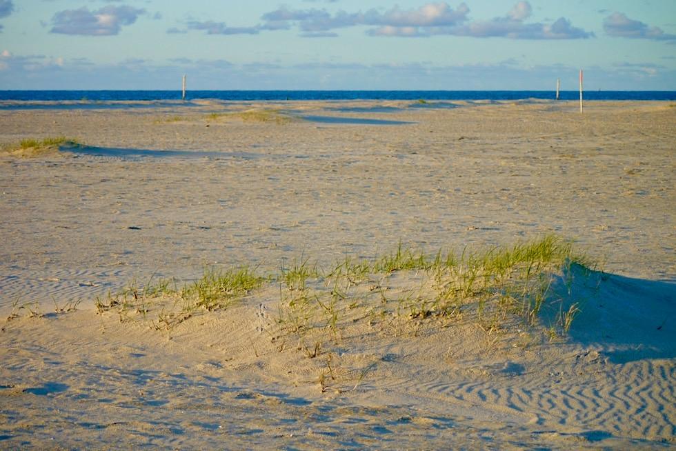 Wangerooge - Sanddünen-Babies & vielleicht neue Sanddünen - Ostfriesische Inseln - Nordsee