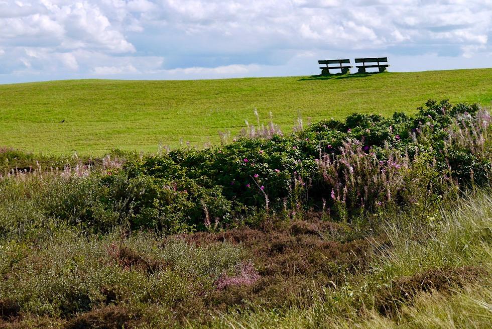 Wangerooge - Schöne Aussichtsplätze im Westteil laden zum Verweilen ein - Ostfriesische Inseln - Nordsee