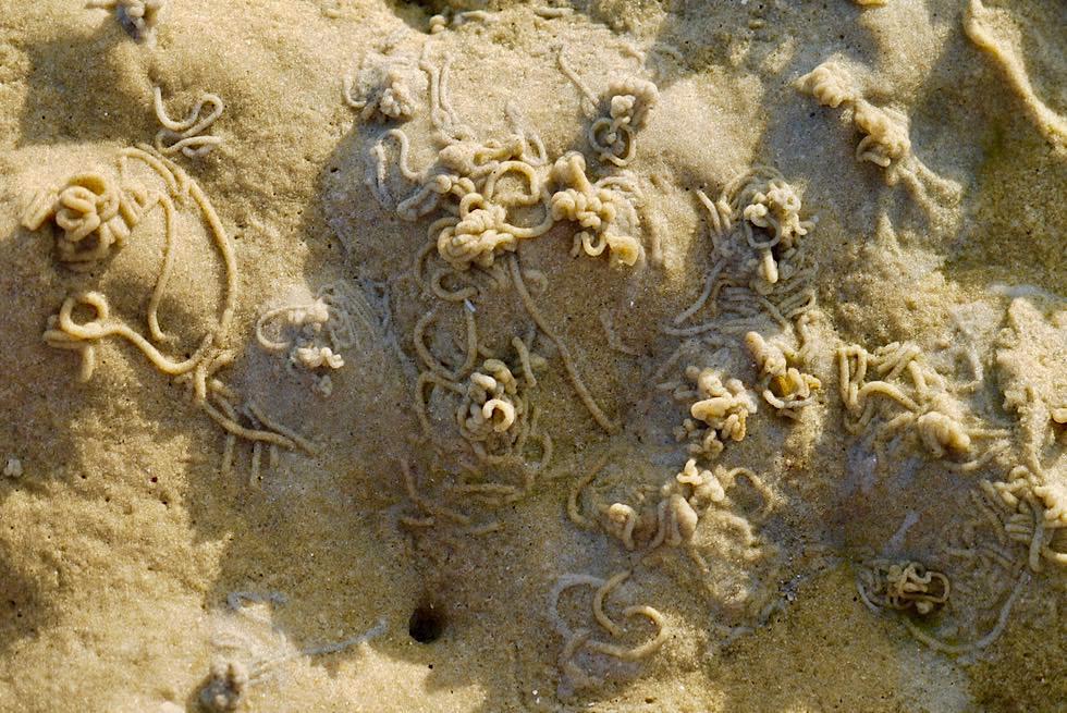Wangerooge - Wattwürmer Spuren - Ostfrische Inseln - Nationalpark Wattenmeer & Nordsee