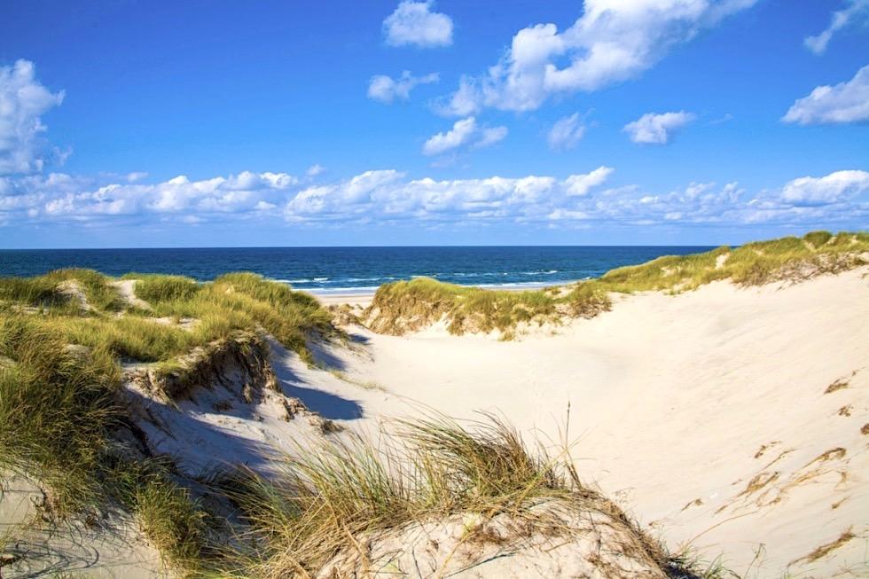 Weißdüne oder Sekundärdüne - Nationalpark Wattenmeer - Ostfriesische Inseln - Nordsee
