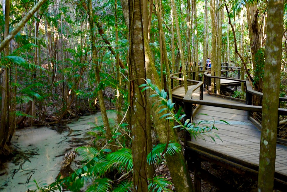 Wanggoolba Creek - Wunderschöner Boardwalk - Central Station, Fraser Island Highlight - Queensland