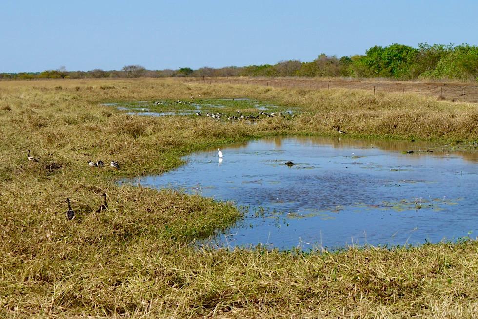 Adelaide River Wetlands: einmalige küstennahe Feuchtgebiete - Northern Territory
