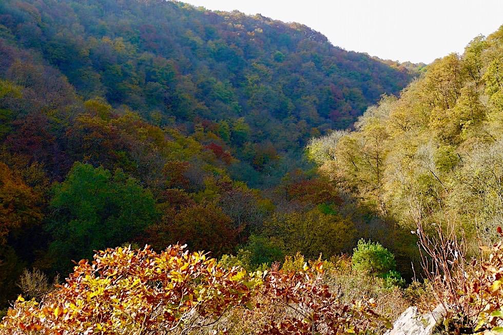 Traumschleife Ehrbachklamm - Ausblick beim Aufstieg auf die bewaldeten Hänge der Schlucht - Rheinland-Pfalz