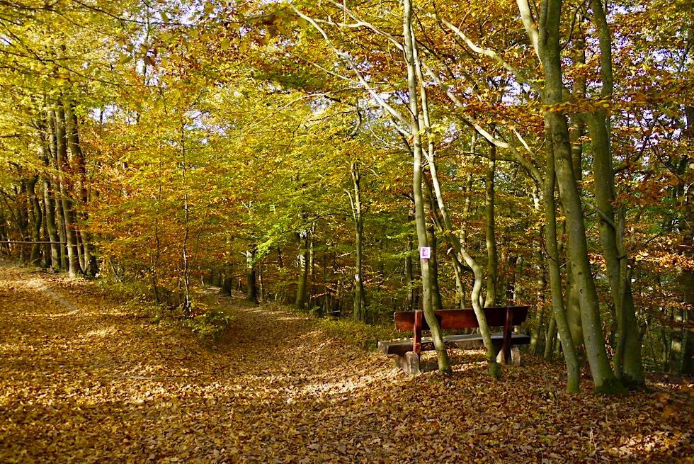 Ehrbachklamm Traumschleifen-Wanderung - Erster Waldabschnitt nach der Hunsrück Hochebene - Rheinland-Pfalz