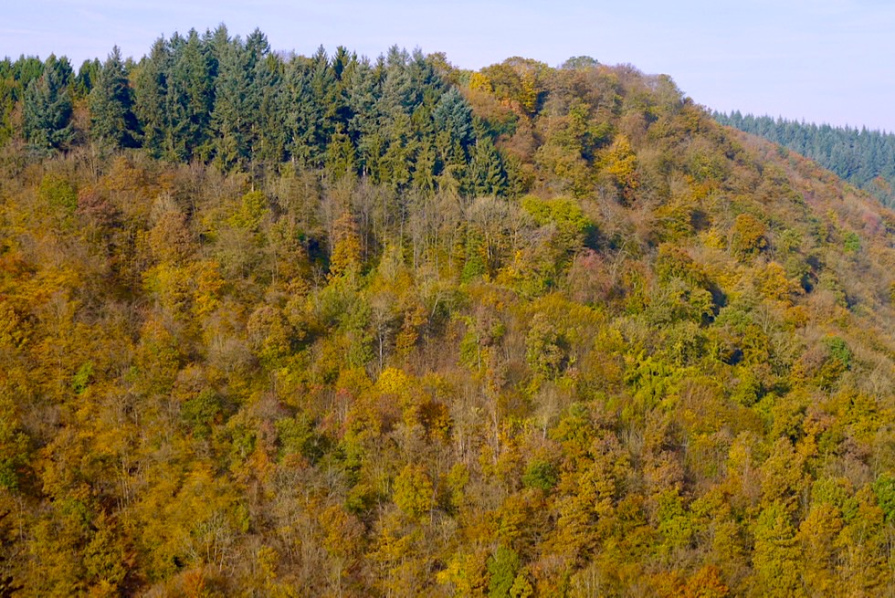 Traumschleife Ehrbachklamm - Ausblick auf Herbstwald von der Aussichtsplattform Beulslay - Rheinland-Pfalz