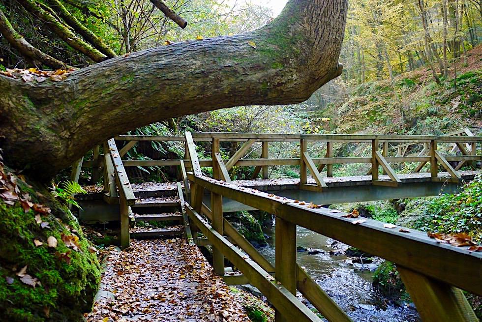 Traumschleife Ehrbachklamm - Eine der Traumschleifen Wanderungen am Fernwanderweg Saar-Hunsrück Steig - Rheinland-Pfalz Reisetipps