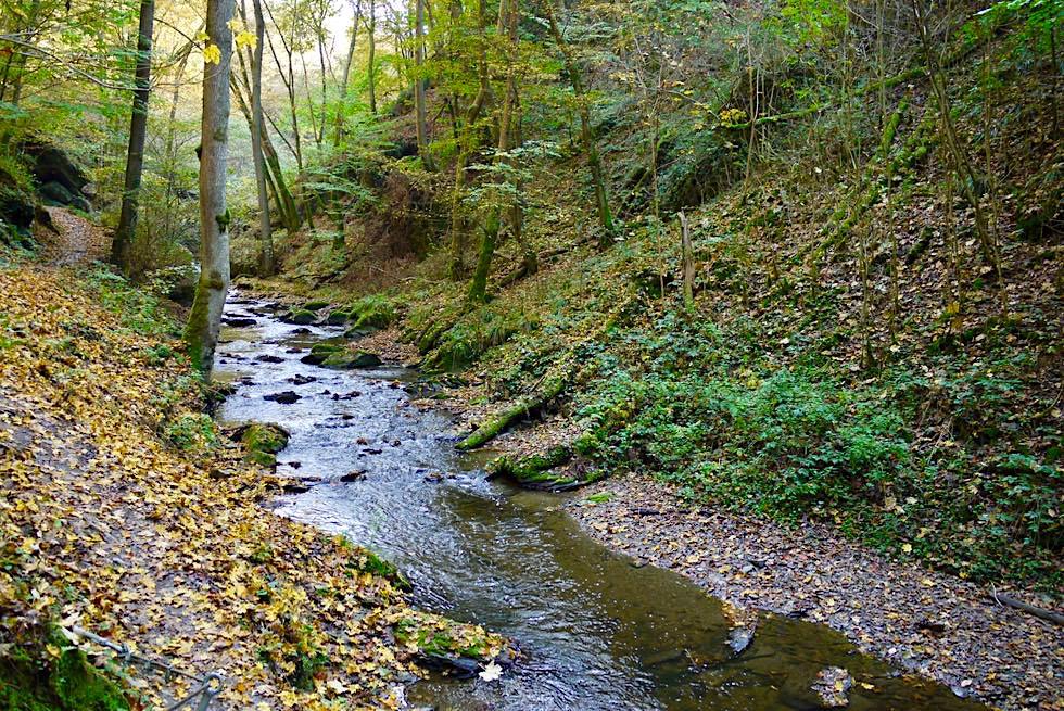 Ehrbachklamm Wanderung - Entlang des lustig plätschernden Ehrbachs - Hunsrück - Rheinland-Pfalz