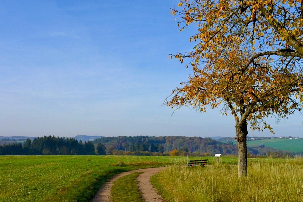 Ehrbachklamm Traumschleifen-Wanderung - Hunsrück Plateau & weiter Ausblicke - Rheinland-Pfalz