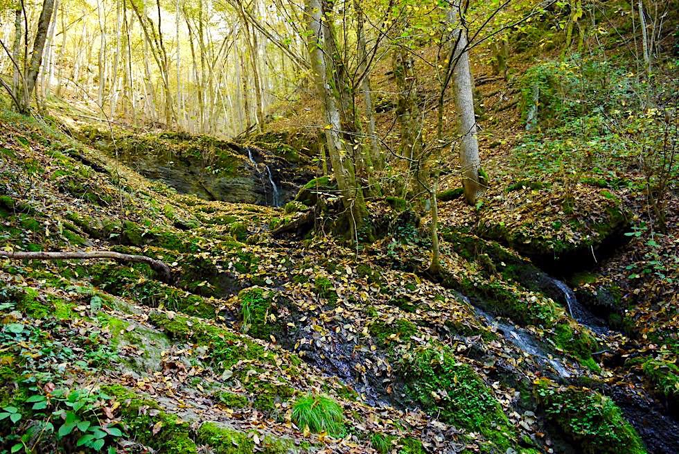 Ehrbachklamm - Wasserzulauf aus den Schluchtenwänden - Hunsrück Traumschleifen-Wanderung - Rheinland-Pfalz