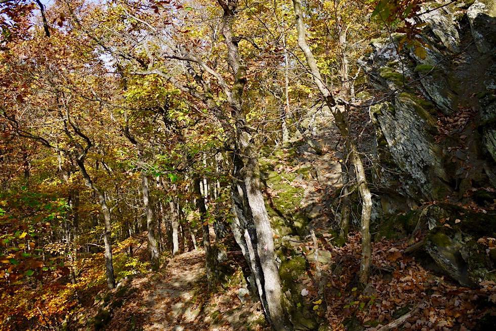Traumschleife Ehrbachklamm - Wegführung nach Aussichtspunkt auf Hunsrück-Kamm - Rheinland-Pfalz