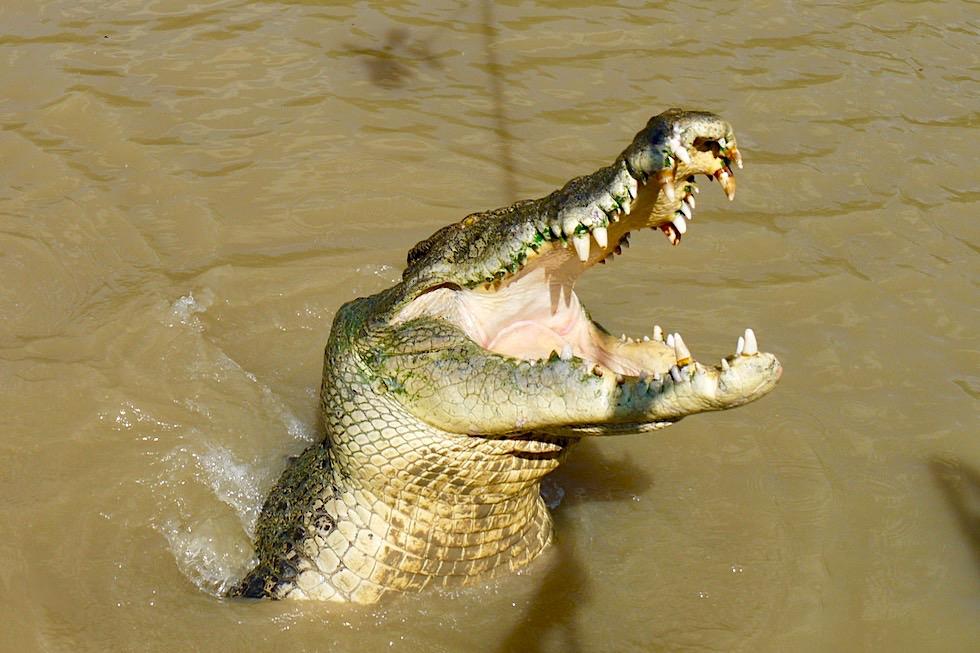 Jumping Crocodile Cruise - Springendes Krokodil mit aufgerissenem Maul - Adelaide River - Northern Territory