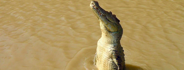Jumping Crocodile – Springende Krokodile & packende Jagdmethoden der Tierwelt