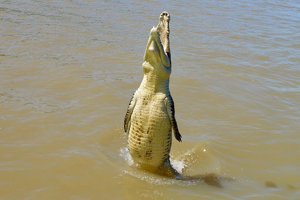Jumping Crocodile Cruise - Faszinierender Anblick: Springende Krokodile im Adelaide River - Northern Territory