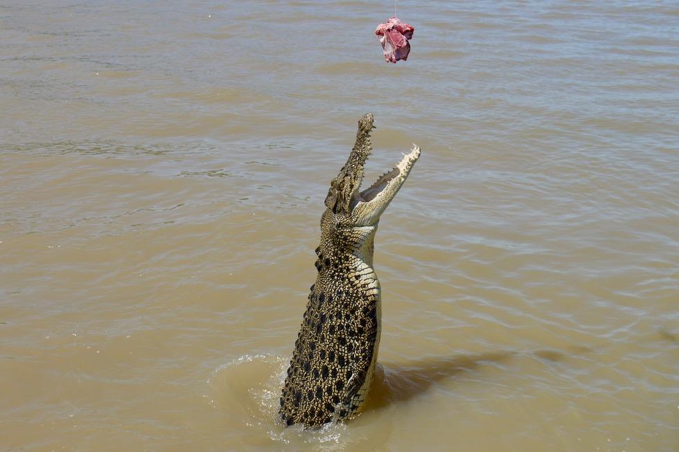 Jumping Crocodile Cruise - Krokodil schnellt aus dem Wasser empor - Adelaide River - Northern Territory