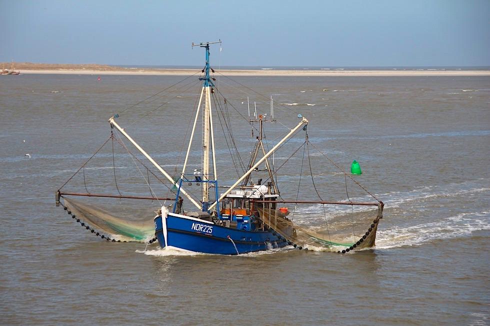Krabbenkutter beim Fischfang & Nordseekrabben-Fang - Nordsee - Ostfriesland